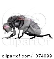 Clipart 3d Black House Fly 2 Royalty Free CGI Illustration