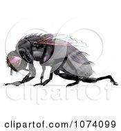 Clipart 3d Black House Fly 2 Royalty Free CGI Illustration