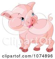 Cute Chubby Baby Pig