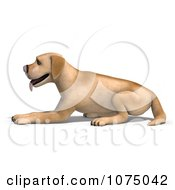 Clipart 3d Yellow Lab Dog Laying 1 Royalty Free CGI Illustration