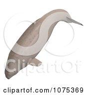 3d Tan Beluga Whale Calf 1