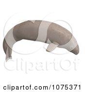 3d Tan Beluga Whale Calf 3