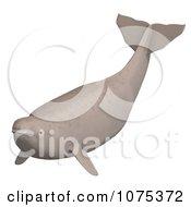 3d Tan Beluga Whale Calf 4