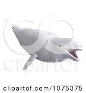 3d White Female Beluga Whale 3