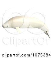 Clipart 3d White Male Beluga Whale 4 Royalty Free CGI Illustration