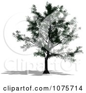 Clipart 3d Maple Tree Royalty Free CGI Illustration by Ralf61