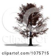 Clipart 3d Red Oak Tree Royalty Free CGI Illustration