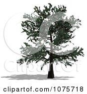 Clipart 3d Tree 4 Royalty Free CGI Illustration