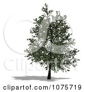 Clipart 3d Tree 5 Royalty Free CGI Illustration