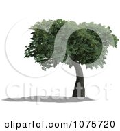 Clipart 3d Tree 6 Royalty Free CGI Illustration