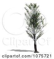 Clipart 3d Tree 7 Royalty Free CGI Illustration