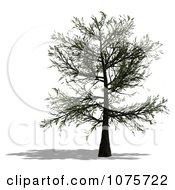Clipart 3d Tree 8 Royalty Free CGI Illustration