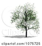 Clipart 3d Tree 10 Royalty Free CGI Illustration