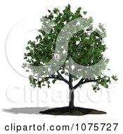 Clipart 3d Oak Tree Royalty Free CGI Illustration