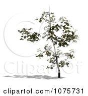 Clipart 3d Small Tree 1 Royalty Free CGI Illustration
