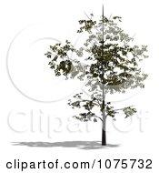 Clipart 3d Small Tree 2 Royalty Free CGI Illustration
