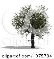 Clipart 3d Tree 1 Royalty Free CGI Illustration