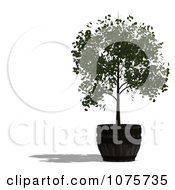 Clipart 3d Potted Tree 2 Royalty Free CGI Illustration