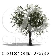 Clipart 3d Tree 2 Royalty Free CGI Illustration