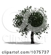 Clipart 3d Chestnut Tree Royalty Free CGI Illustration