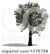 Clipart 3d Tree 3 Royalty Free CGI Illustration