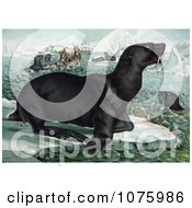 Sea Lions On Ice Bergs Nea Ships Royalty Free Historical Clip Art by JVPD