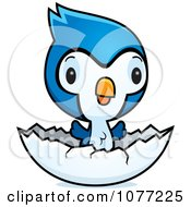 Clipart Cute Baby Bluejay Chick Hatching Royalty Free Vector Illustration