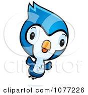 Bluejay Chicks by Cory Thoman