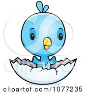Clipart Cute Baby Blue Jay Chick Hatching Royalty Free Vector Illustration