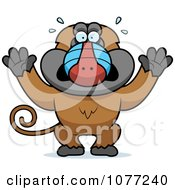 Clipart Scared Baboon Monkey Royalty Free Vector Illustration by Cory Thoman