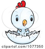 Clipart Cute Baby White Rooster Chick Hatching Royalty Free Vector Illustration