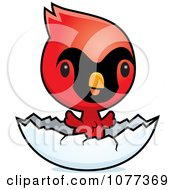 Clipart Cute Red Baby Cardinal Chick Hatching Royalty Free Vector Illustration by Cory Thoman