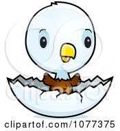 Clipart Cute Baby Bald American Eagle Chick Hatching Royalty Free Vector Illustration