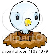 Cute Baby Bald American Eagle Chick In A Nest