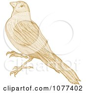 Clipart Sepia Sketched Bird Royalty Free Vector Illustration by Any Vector