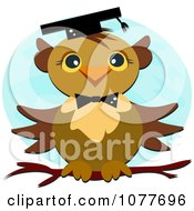 Graduate Owl On A Branch