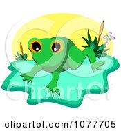 Frog On A Lily Pad Over A Pond