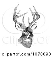 White Tailed Deer Odocoileus Virginianus With Antlers Royalty Free Clip Art