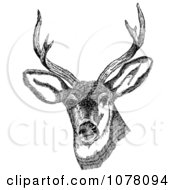 Deer With Antlers Royalty Free Clip Art by JVPD
