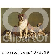Group Of Dogs St Bernard Hound Mastiff Bulldog Jack Russell Terrier A King Charles Spaniel And Two Other Little Dogs At The New England Kennel Clubs Dog Show Royalty Free Historical Clip Art by JVPD