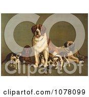 Group Dogs Bernard Hound Mastiff