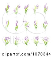 Clipart Purple And Green Floral Logos With Reflections Royalty Free Vector Illustration by elena