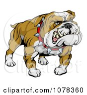 Clipart Mean And Muscular Bulldog Growling Royalty Free Vector Illustration