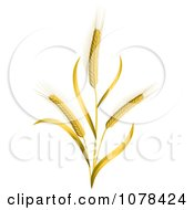 Clipart 3d Ears Of Wheat Stalks Royalty Free Vector Illustration by Oligo