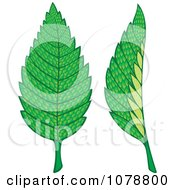 Clipart Two Mint Leaves Royalty Free Vector Illustration by Any Vector