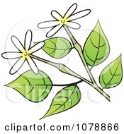 Clipart Branch With Small White And Yellow Flowers Royalty Free Vector Illustration