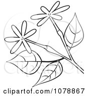Clipart Black And White Branch With Small Flowers Royalty Free Vector Illustration