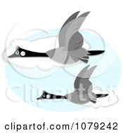 Clipart Canadian Geese Flying Against Clouds Royalty Free Vector Illustration