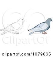 Clipart Colored And Outlined Doves Royalty Free Vector Illustration