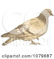 Clipart Sepia Dove - Royalty Free Vector Illustration by Andrei Marincas #COLLC1079687-0167